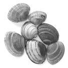 SeaShells by Kathie Nichols