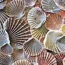 Scallop Shells I by Kathie Nichols