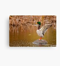Wing Stretch Canvas Print