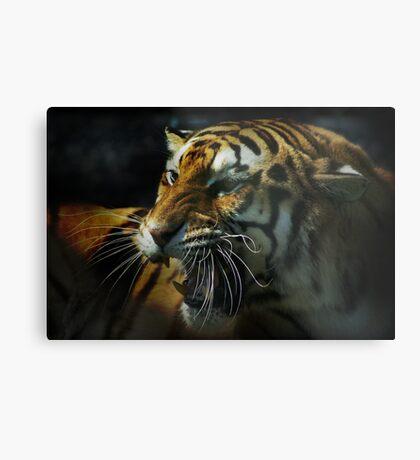 Snarling Tiger  Metal Print