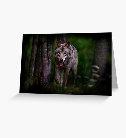 Timberwolf 1 - Photoshop Manipulation Greeting Card