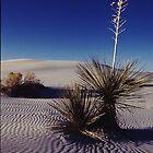 White Sands by Tom Hobbs