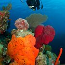 Mike investigates bright coral patch by muzy