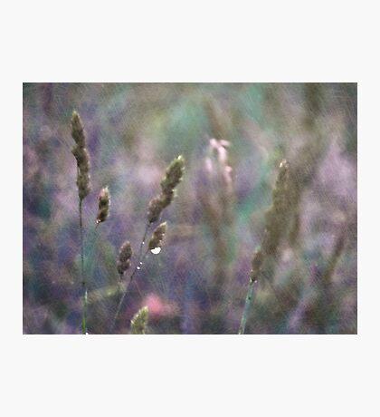 Summer Grass 8 Photographic Print