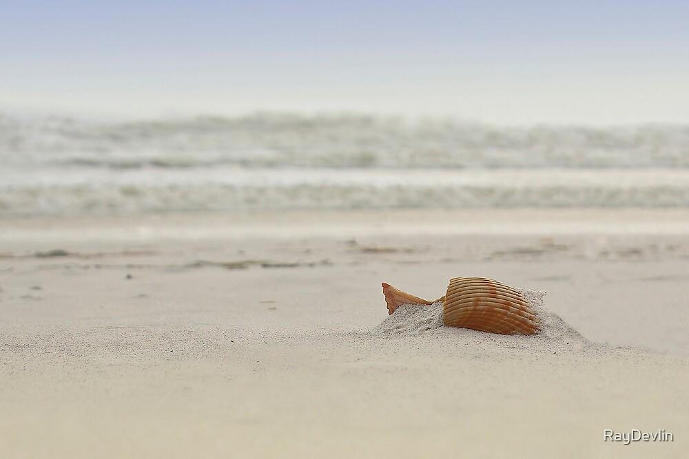 Gulf Shore Shell by RayDevlin