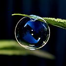 Forever Blowing Bubbles by AnnDixon