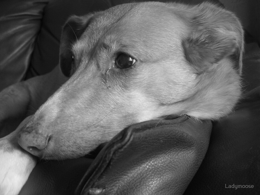 Maisey Daisy by Ladymoose