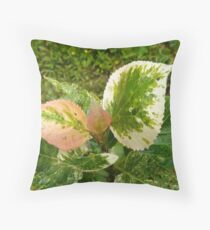 variegated poplar Throw Pillow