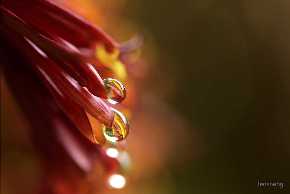 red-gold raindrops in tandem by lensbaby