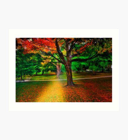 Brookline park at fall Art Print