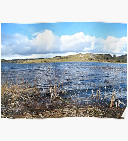 Windy reeds and puff ball clouds Poster