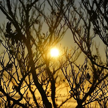 Sunset and branches by fourretout