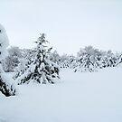 Winter Wonderland by Glenna Walker