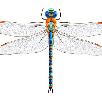DRAGONFLY. VERTICAL. by TOMSREDBUBBLE