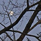 moon branches out by Doreen Connors