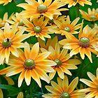 I Found a Garden of Happy! by autumnwind