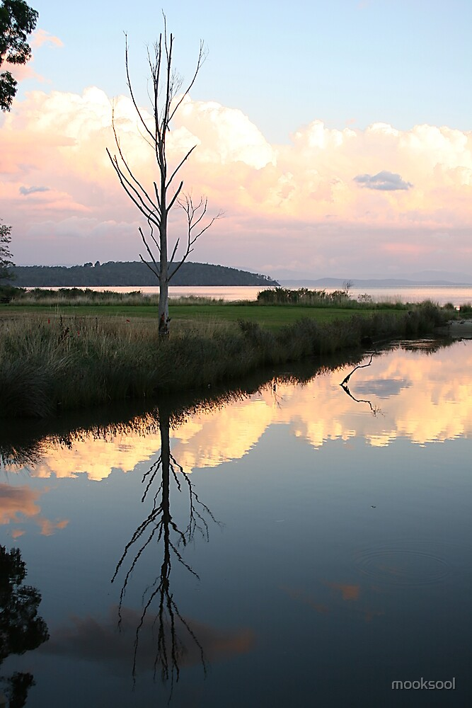 Reflecting on a Dover tree by mooksool