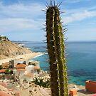 Cabo San Lucas by Dalmatinka