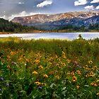 Wildflowers at Island Lake by Kathy Weaver