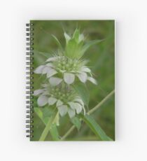 Young Bee Balm Spiral Notebook