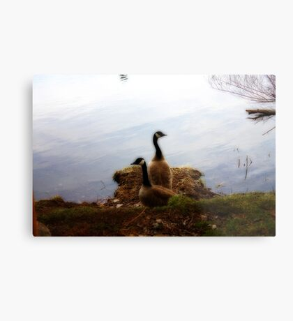 Which Way Do We Go Metal Print