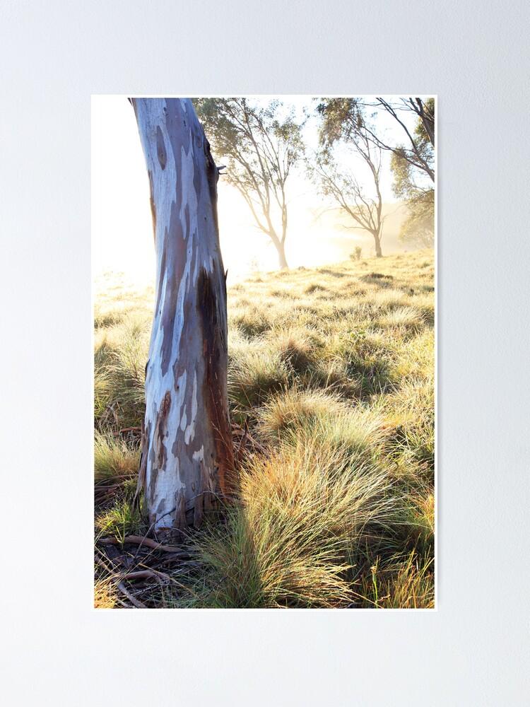 Alternate view of Misty Gumtree, Kosciusko National Park, Australia Poster