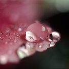 The Beauty of Rain by Kym Howard