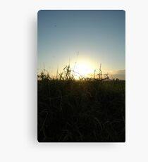 Sunshine, grasses of the north Canvas Print