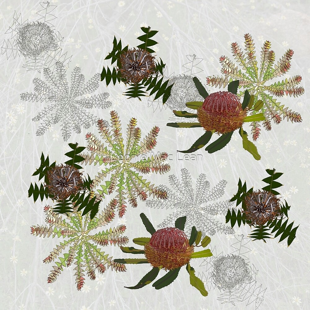 Mixed Banksia Digital Drawing, native flora, West Australian wildflowers. by Leonie Mac Lean