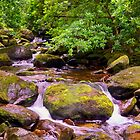 Cascade and Moss - Torc Waterfall by TonyCrehan