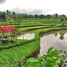 Typical Bali..... by Adri  Padmos