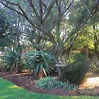 Early-morning along the garden path by Hedgie's Nature & Gardening Journal