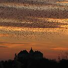 Silhouettes at sunset by Elena Skvortsova