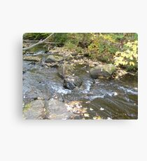 Running Creek Canvas Print