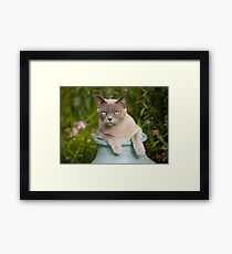 Top Cat ! Framed Print