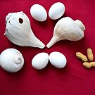 Easter egg shells by Lovemydesigns