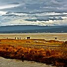 banks of Humbolt bay by XanthicAmber