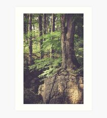 Mystic woodland Art Print