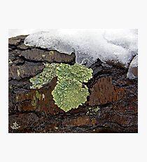 Lichen on Wet Bark Photographic Print