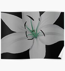 Painted Lilies Collection #11 Poster