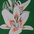 Painted Lilies Collectiohn #12 by Laura Dhir
