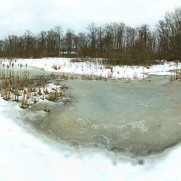 Emily Traphagen Nature Preserve's frosty pond by sublime