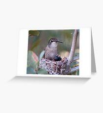 Hummingbirds Tiny Cycle of Life # 3 Greeting Card