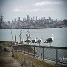 Seabirds of Alcatraz by RiverDeeDesigns