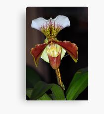 Lady Slipper Orchid Flower Canvas Print