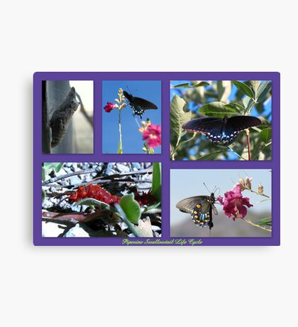 Pipevine Swallowtail Life Cycle Canvas Print