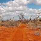BARREN BUSH VELD WINTER IN AFRIKA von Magriet Meintjes