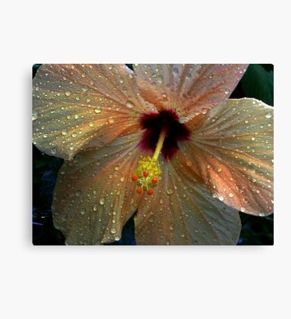 Hybiscus after the rain Canvas Print