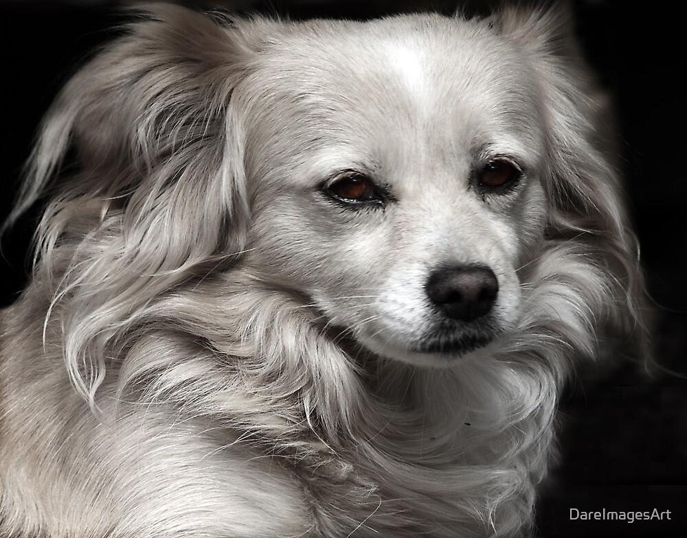 one puppy by DareImagesArt