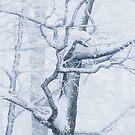 Frozen snowy tree by Patrik Lovrin